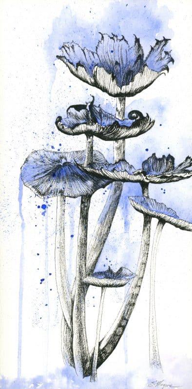 mushroom art, watercolor mushrooms, mushroom drawing
